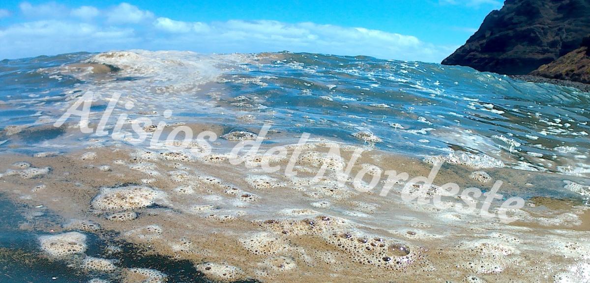Mocos flotantes en la costa nordeste de Tenerife