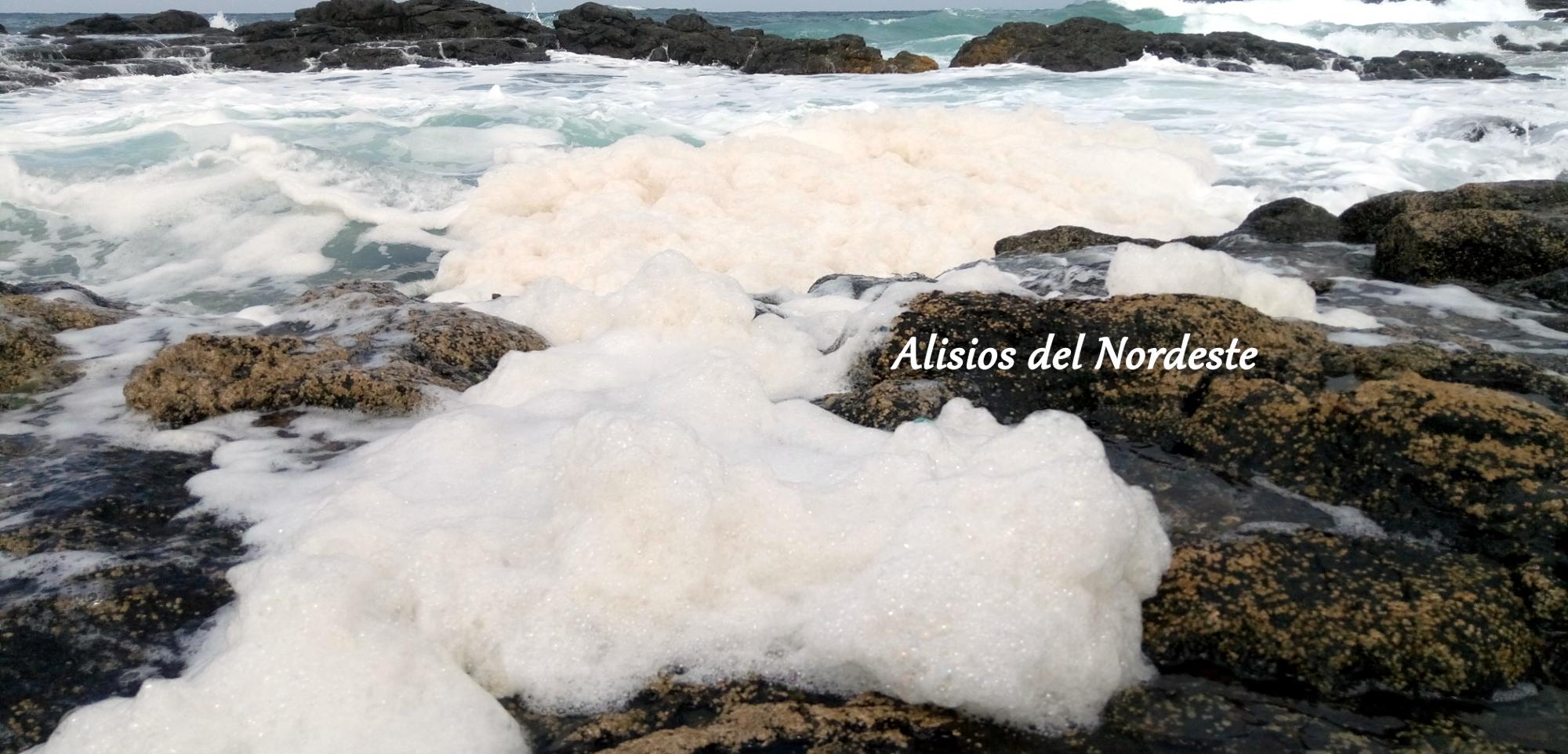 Vertidos fecales y microalgas en Punta del Hidalgo